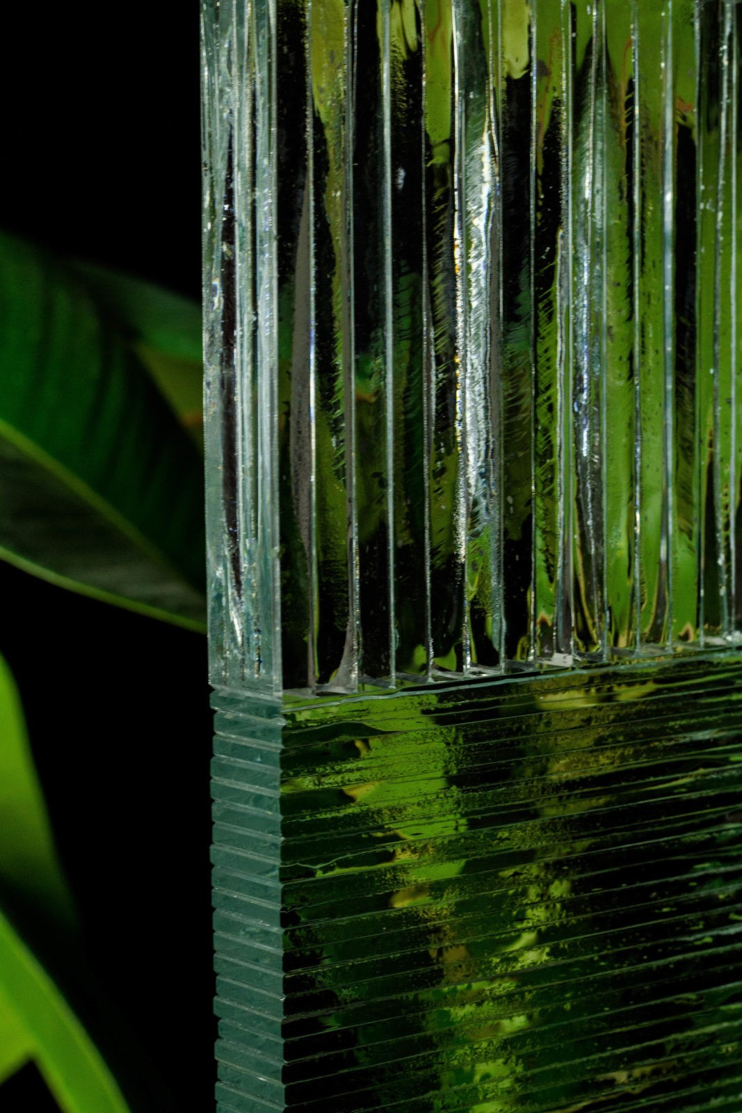 Paroi verre plante lamelles fragment